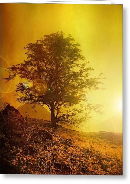 Sunrise Flare Greeting Card by Svetlana Sewell