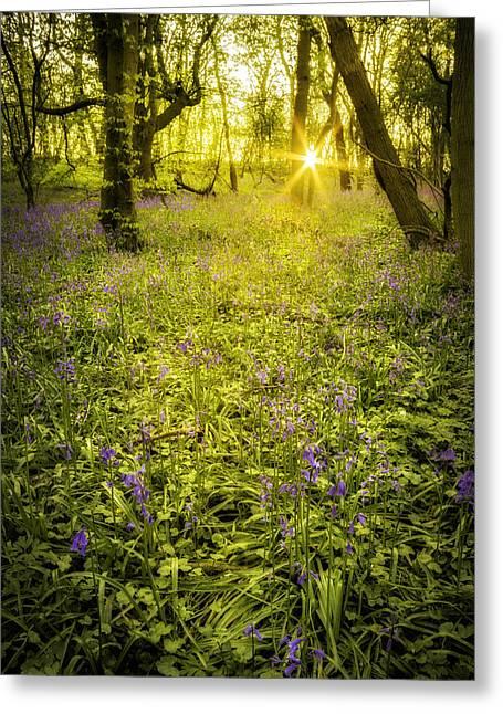 Sunrise In Bluebell Woods Greeting Card by Amanda Elwell