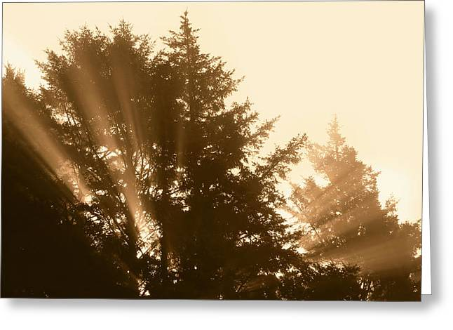 Sunrise In Sepia Greeting Card by Katie Wing Vigil