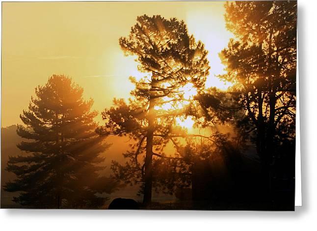 Sunrise Greeting Card by Karen Harrison