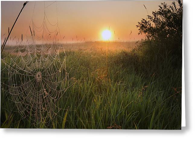 Sunrise On A Dew-covered Cattle Pasture Greeting Card by Dan Jurak