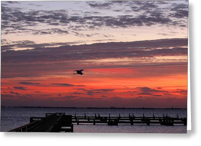 Sunrise On The Indian River Greeting Card by Jeanne Andrews