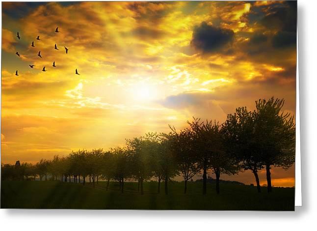 Sunrise Over Tree Line Greeting Card