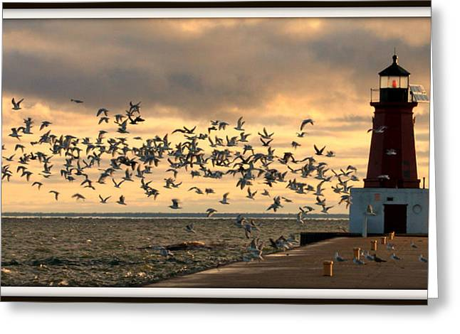 Sunrise Seagulls 219 Greeting Card by Mark J Seefeldt