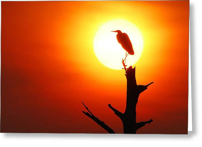 Sunrise Sentinel Greeting Card by Jessie Dickson