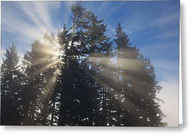 Sunrise Through The Morning Fog Greeting Card