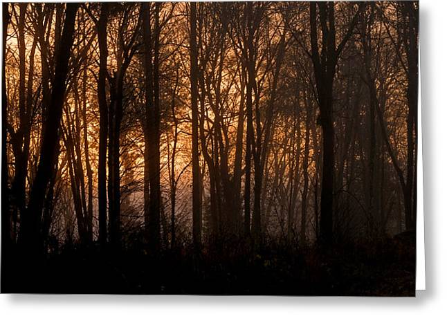 Sunrise Through Trees Greeting Card by Shawn Zimmerman