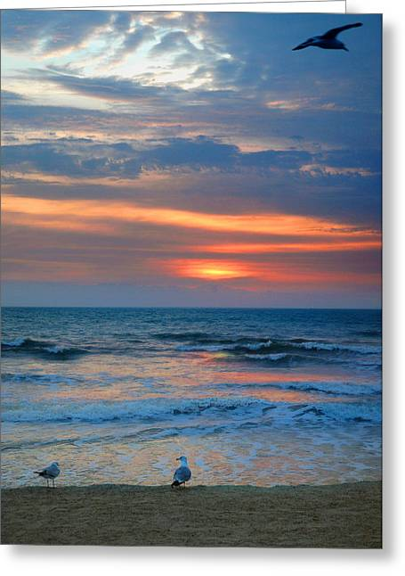 Sunrise With The Gulls Greeting Card