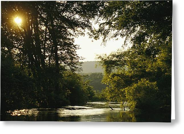 Sunset Above A Riparian Forest Greeting Card by Raymond Gehman