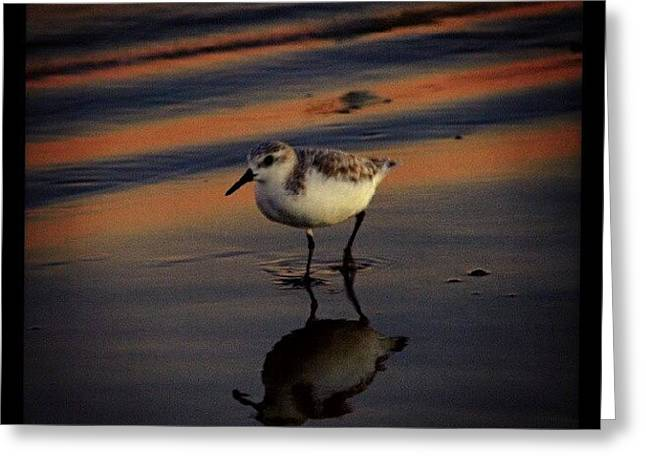 Sunset And Bird Reflection Greeting Card