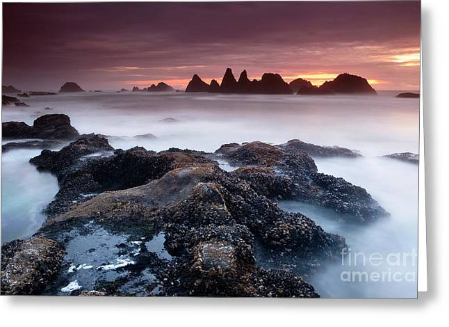 Sunset At Seal Rock Greeting Card by Keith Kapple