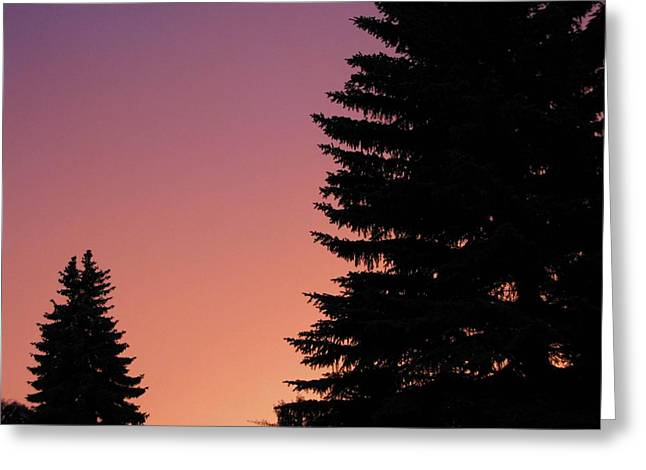 Greeting Card featuring the photograph Sunset Between Two Evergreens by Brian Sereda