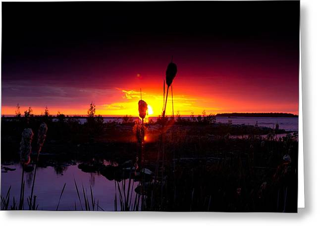 Sunset Cat Tail Greeting Card