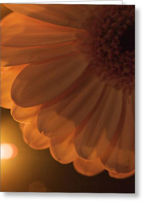 Greeting Card featuring the photograph Sunset Flower by JM Photography