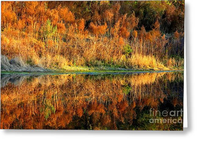 Sunset Glow On The Pond Greeting Card