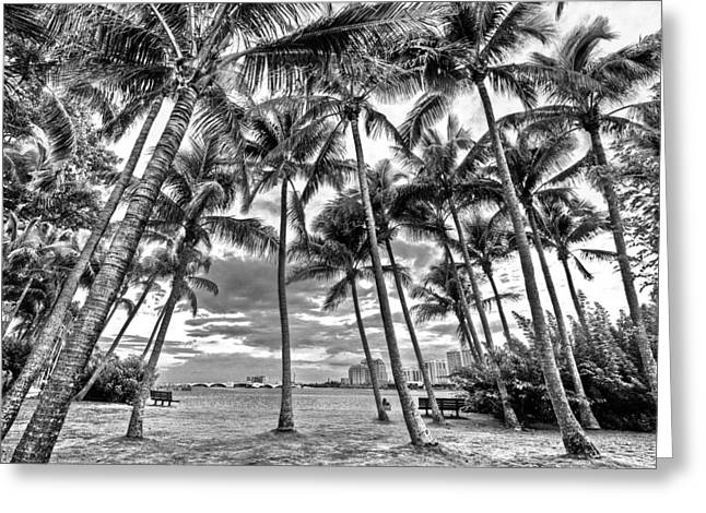 Sunset Grove At Palm Beach Greeting Card by Debra and Dave Vanderlaan