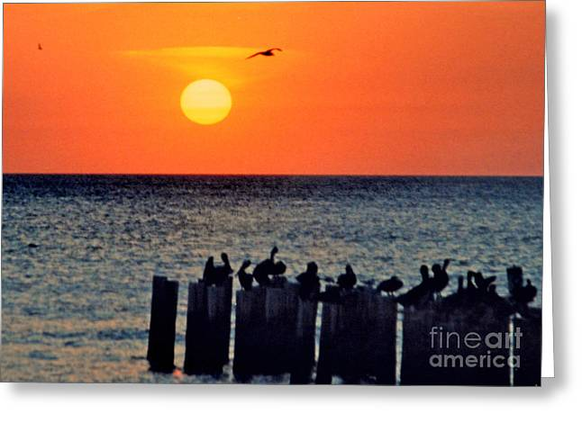 Greeting Card featuring the photograph Sunset In Florida by Lydia Holly