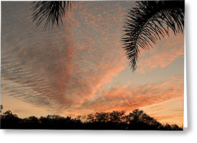 Sunset In Lace Greeting Card