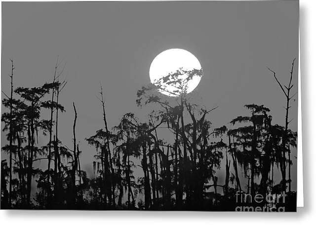 Greeting Card featuring the photograph Sunset In Swamp by Luana K Perez