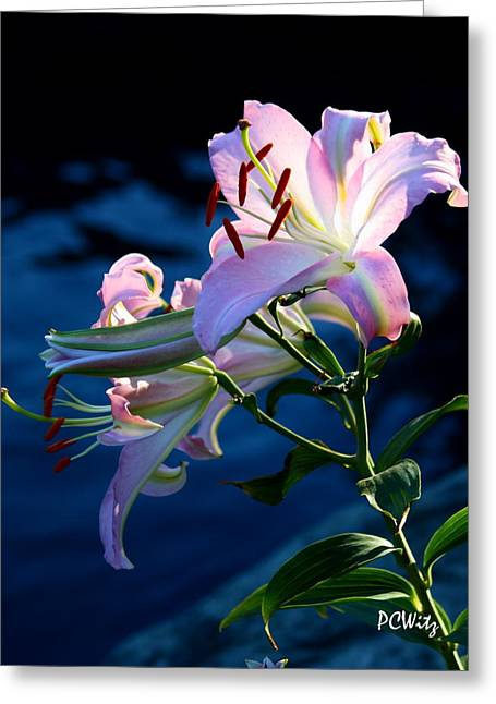 Greeting Card featuring the photograph Sunset Lily by Patrick Witz