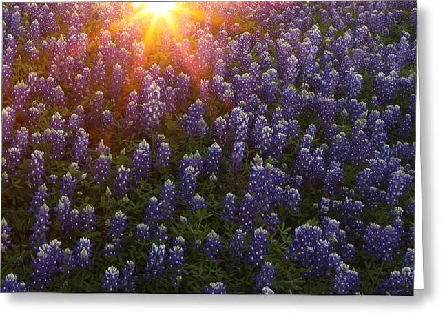 Greeting Card featuring the photograph Sunset Over Bluebonnets by Susan Rovira