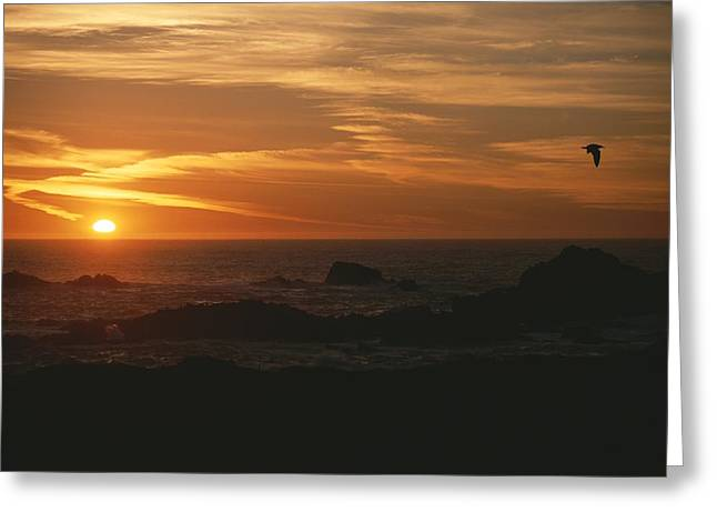 Sunset Over The Pacific Ocean Greeting Card by Todd Gipstein