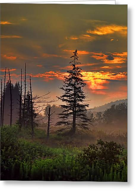 Sunset Pine Greeting Card