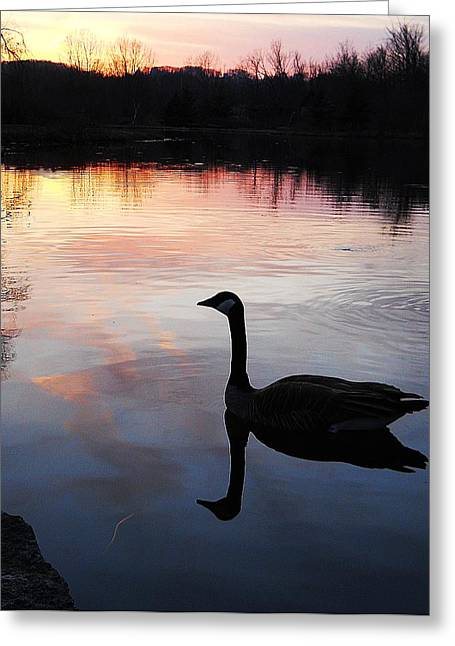 Sunset Serenity Greeting Card by Shelley Patten-Forster