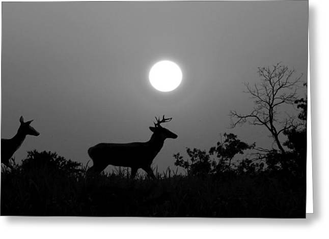 Sunset Silhouette Bw Greeting Card