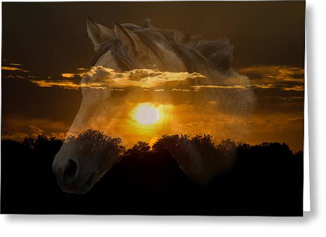 Sunset Silhouette Greeting Card by Lisa Moore