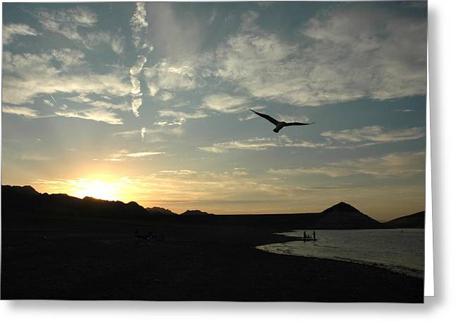 Sunset Soaring Greeting Card by Jonathan Schreiber