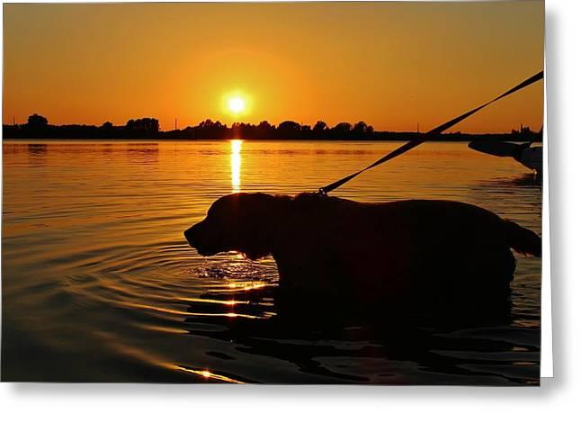 Sunset Swim Greeting Card by Alexander Spahn