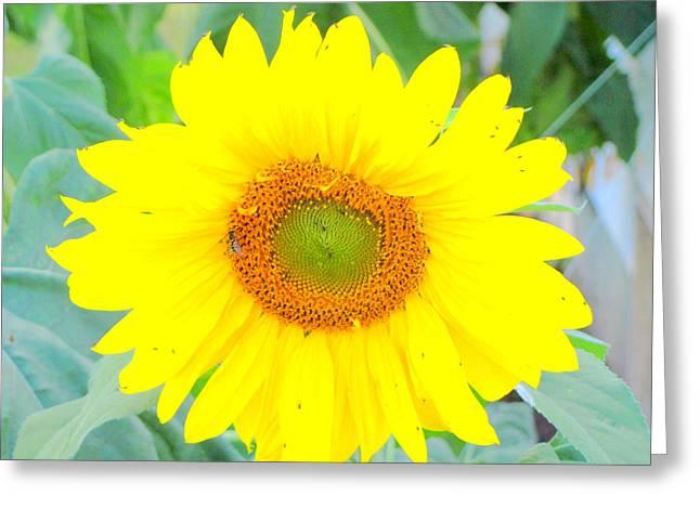 Sunshine Flower Greeting Card by Amy Bradley