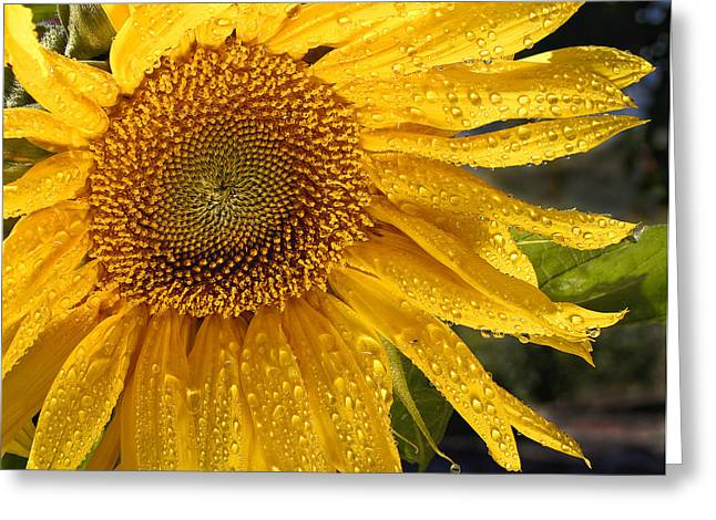 Sunshine Greeting Card by Jean Noren