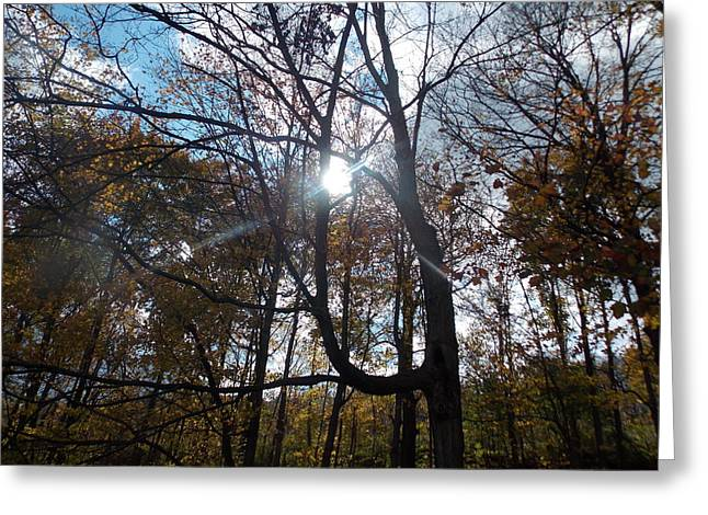 Sunshine Through The Trees In The Fall Greeting Card by Angelika MacDonald