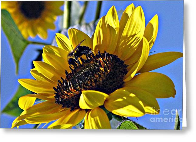 Sunshine Visitor Greeting Card