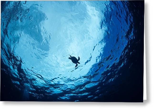 Surfacing Sea Turtle Greeting Card