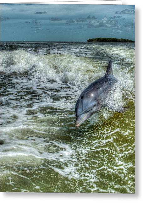 Surfing Dolphin Greeting Card