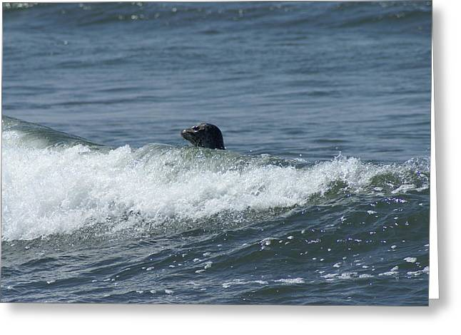 Surfing Seal Greeting Card