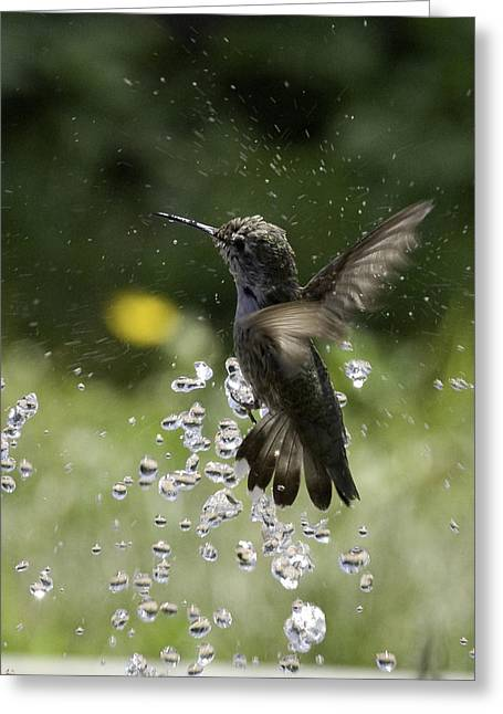 Surfing The Drops Of Water Greeting Card