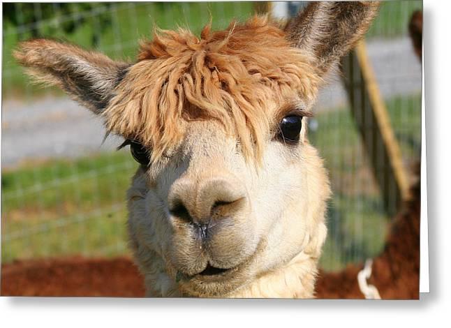Suri Alpaca Number 7 Greeting Card