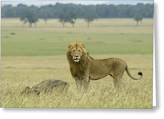 Surveying His Kingdom Greeting Card by Michele Burgess