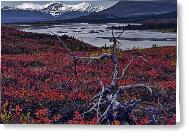 Susitna River Greeting Card