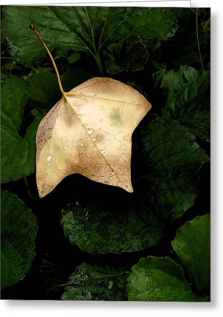 Suspended Leaf Greeting Card by Glenn Donze