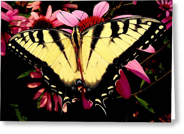 Greeting Card featuring the photograph Swallowtail Butterfly On A Purple Coneflower by George Bostian