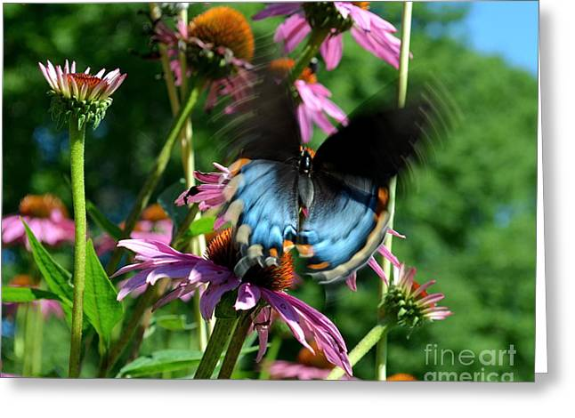 Swallowtail In Motion Greeting Card
