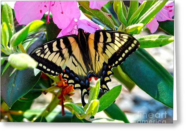 Swallowtail Spring Greeting Card