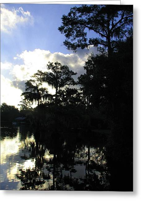 Swamp Dawn Greeting Card by Don L Williams