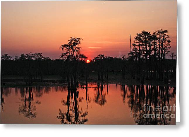 Greeting Card featuring the photograph Swamp Sunset by Luana K Perez