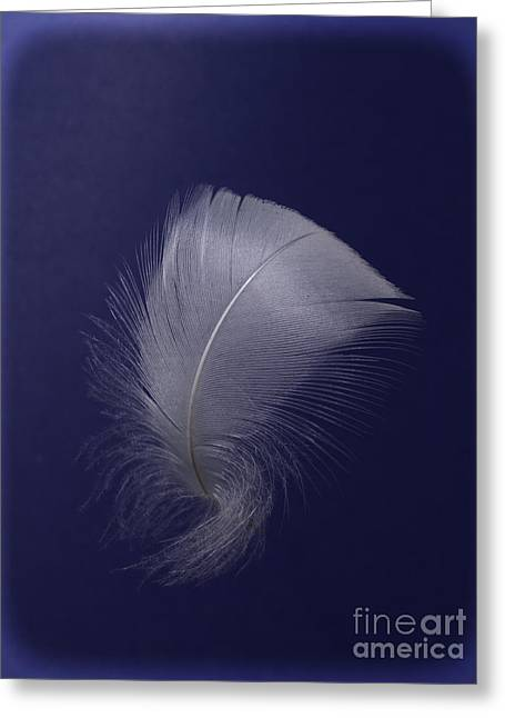 Swan Feather On Purple Greeting Card by Steev Stamford